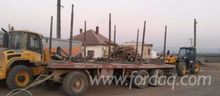 Rema Moving-Floor Trailer in Ro