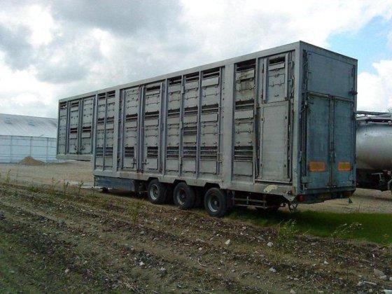 1993 Pezzaioli 3 stock. schweine