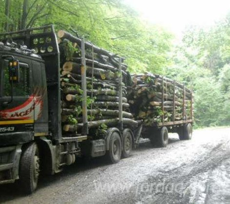 Short Log Truck Romania in