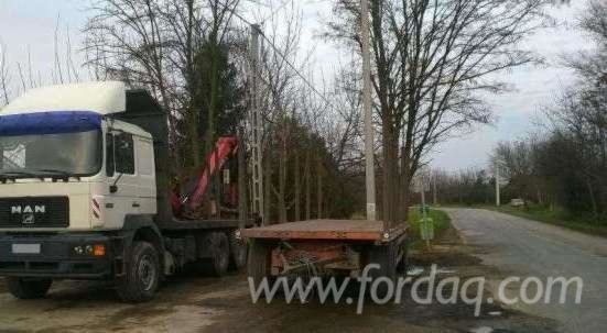 Longlog Truck Romania in Romania
