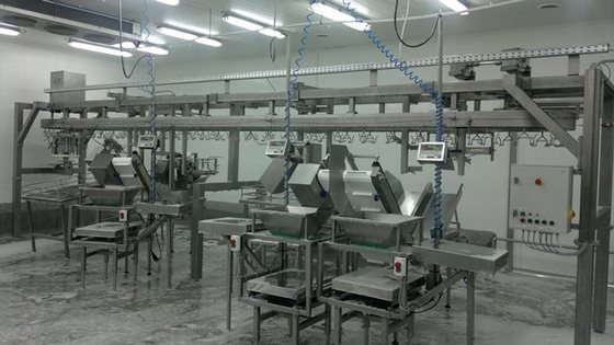 Automatic Chicken cut up line