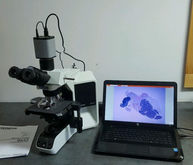 Olympus Microscope BX43 with 2X