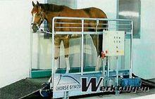 Horse Gym 2000 Paardenloopband