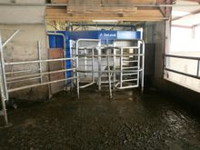 Milking parlour / Automatic mil