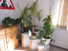 Room plants div. # 69671