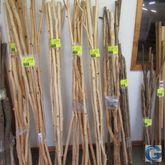 Aspen walking sticks