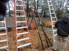 8' Wooden Orchard Ladder