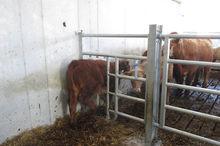 Gate hangers, Calf creep gate,