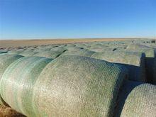 2016 Irrigated Wheat Straw Bale