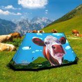 Telt Glasto cows