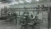 Automatic Chicken cut up line 4