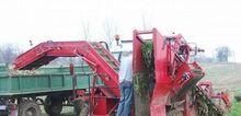 Morkovouborochny harvester AS
