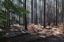 Woodland Land