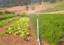 2017 irrigation
