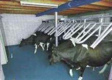 Milkline Side By Side Milking S