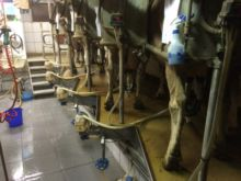 Milkline Fishbone 2x5 AA26 Milk